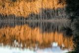 Sunrise, Willinga Creek, Meroo National Park
