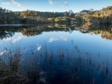Willinga Creek serenity
