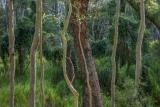 Forest ecotone, Meroo National Park