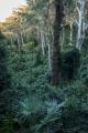 Rainforest, Murramarang National Park