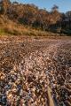 Beach of shells