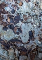 Marine fossils, Murramarang National Park
