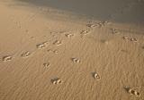 Beach tracks, Nadgee Nature Reserve