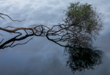 Melaleuca, Merrica River, Nadgee Nature Reserve