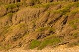 Wind-shaped melaleucas, Nadgee Nature Reserve