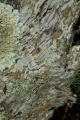 Lichens on old stump