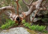 Angophora and ferns