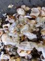 Bluebottles and shells