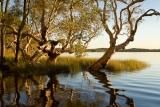 Serene Lake Boolambayte
