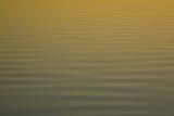 Ripples at sunset, Myall Lakes National Park