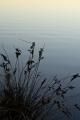 Sedge and ripples