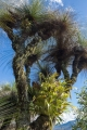 Grasstrees and Elkhorn
