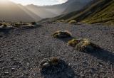 Windswept col, Hunter Mountains, Fiordland