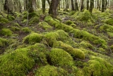 Mosses, Borland Burn