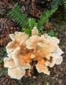 Fungus and fern, Lake Manapouri
