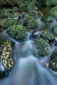 Moss boulders, Fiordland