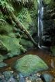 Moss canyon, Fiordland