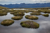 Peat islets, Hunter Mountains