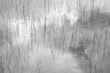 Sedges and cloud reflections