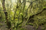 Swampy rainforest, Dean Forest