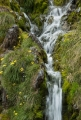 Waterfall with daisies, Eyre Mountains