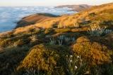 Herbfield at dawn, Garvie Mountains
