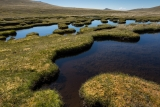 Peat-dammed tarns, Garvie Mountains