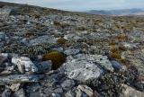 Fjeldmark, Garvie Mountains
