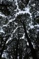 Beech canopy, Garvie Mountains