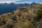 Tussock garden, Solution Range