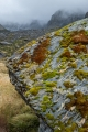Moss, lichens, schist, Marks Flat