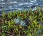 Alpine garden and schist