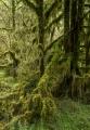Totara forest, Paringa River