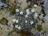 Alpine mosaic, Hunter Mountains, Fiordland