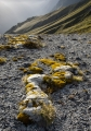 Moss banks, Hunter Mountains, Fiordland