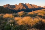 Tussock at dawn, Hunter Mountains, Fiordland