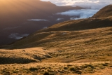 Sunlit tussock, Hunter Mountains, Fiordland
