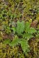 Alpine herbfield