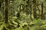 Highland beech forest, Spey River