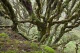 Alpine beech forest