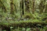 Rainforest, Cascade Creek