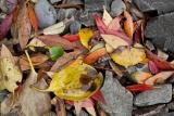 Rainforest leaves, South Port