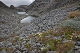 Tarns and gentians