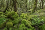 Montane forest above the Cascade River