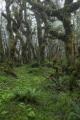 Bushline forest, Red Hills