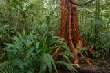 Upland rainforest
