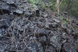 Basalt and vines