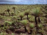 Grasstree heathland, Juunju Daarrba Nhirrpan National Park