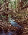 Rainforest stream, Melville Range, Cape York Peninsula
