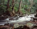 Rainforest, upper Morgan River